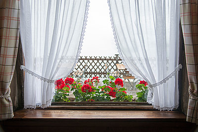 Window with curtains - p1066m970642 by Ulrike Schacht