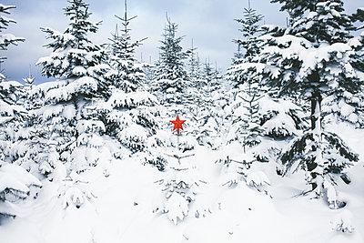 Roter Stern in einem verschneiten Wald - p1006m1425229 von Danel
