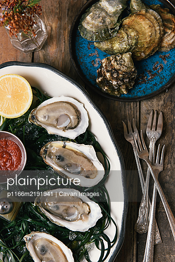 Shucked and fresh caught oysters on a bed of seaweed for appetizers - p1166m2191941 by Cavan Images