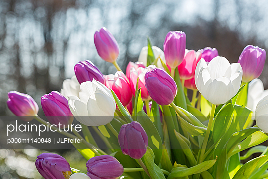 Bouquet of tulips, close-up