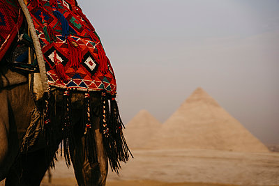 Egypt, Cairo, Saddle of camel standing against Giza Pyramids - p300m2266687 by letizia haessig photography