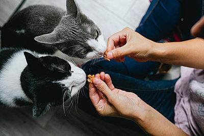 Woman feeding two cats at home - p300m1587042 von Gemma Ferrando