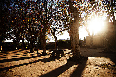 Long shadows of trees in a park - p8870021 by Christian Kuhn