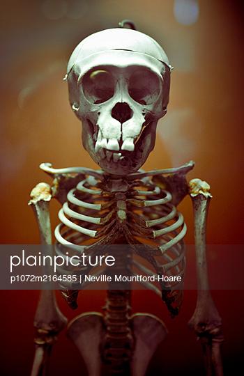 Chimpanzee Skeleton - p1072m2164585 by Neville Mountford-Hoare