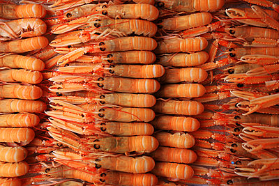 Shrimps - p1016m2142763 by Jochen Knobloch