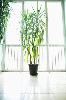 Zimmerpflanze im Treppenhaus - p1149m2116063 von Yvonne Röder