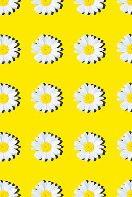 Marguerites - p1149m2187950 by Yvonne Röder
