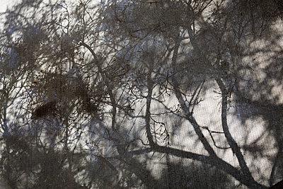 Dead tree - p979m1129247 by Kosa
