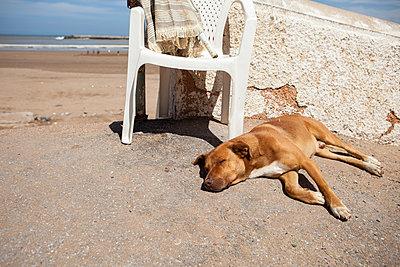 Schlafender Hund am Strand - p1611m2182316 von Bernd Lucka