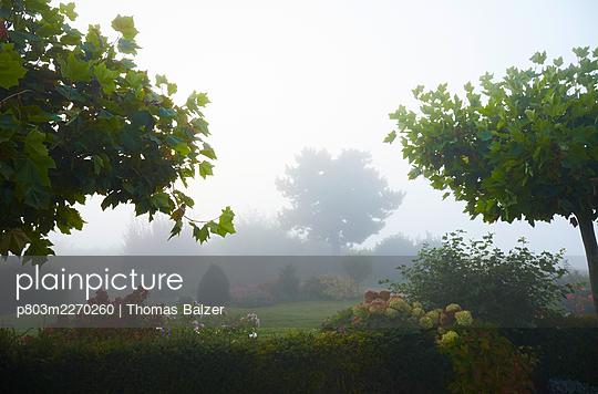 Garden in the mist - p803m2270260 by Thomas Balzer