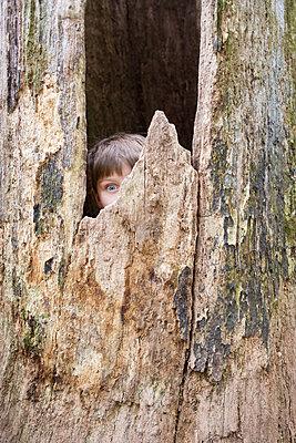 Junge im Baumstamm - p1308m2247493 von felice douglas