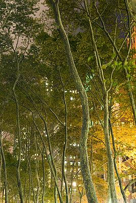 Bryant Park at Night, New York City - p5690025 by Jeff Spielman