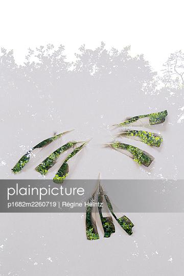 Federkleid - p1682m2260719 von Régine Heintz