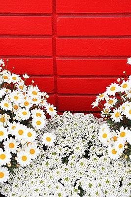 Leuchtende Farben - p0452755 von Jasmin Sander