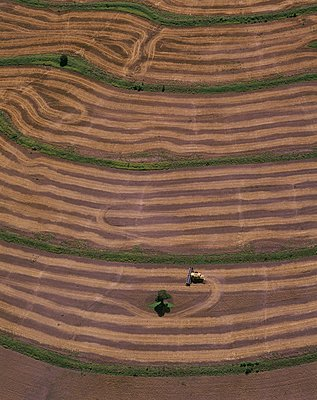 Freshly harvested field, Queensland, Australia. - p1403m1482650 by Education Images