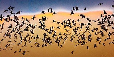 Sandhill cranes take flight over Platte River, near Grand Island, Nebraska - p1403m1547361 by Visions of America