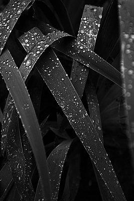 After the rain - p1411m1496291 by Florent Drillon