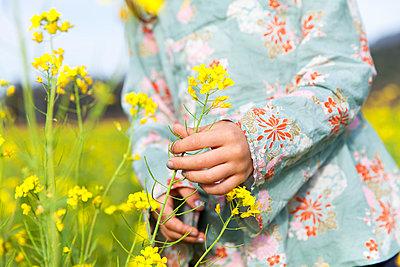 Blossom - p756m1042768 by Bénédicte Lassalle