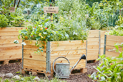Bee friendly raised bed - p962m2175394 by Robert Schlossnickel