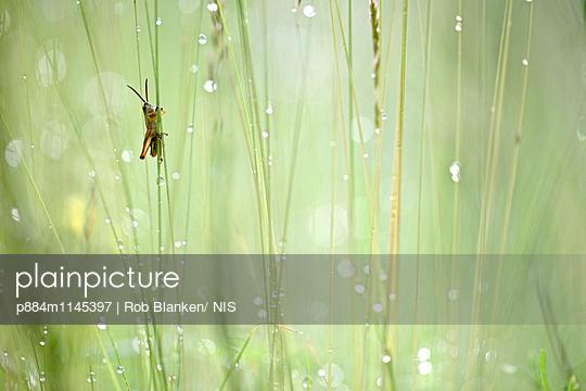 p884m1145397 von Rob Blanken/ NIS
