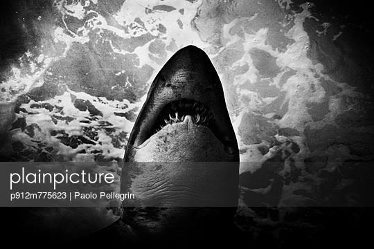 p912m775623 von Paolo Pellegrin