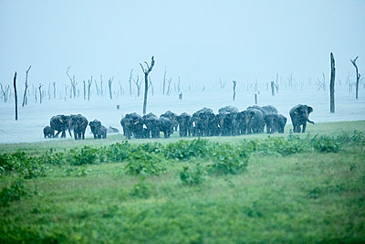 Asian elephant family at Kaudulla National Park against clear sky - p300m2131792 by Christian Vorhofer