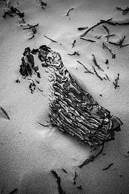 Stilleben im Sand - p305m1171493 von Dirk Morla