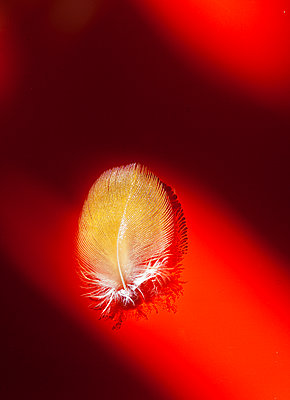 Feather - p873m1548240 by Philip Provily