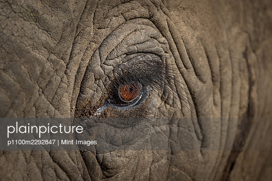 An elephant's eye, Loxodonta africana - p1100m2292847 by Mint Images