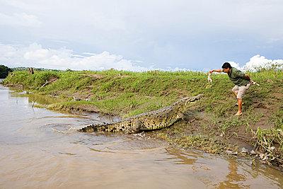 Man feeding a crocodile in costa rica - p9244205f by Image Source