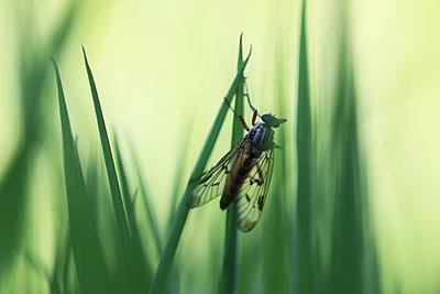 Verstecktes Insekt - p1574m2151339 von manuela deigert