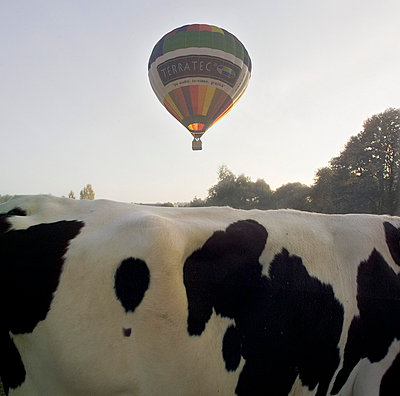 Ballon und Kuh - p9792404 von Burkart