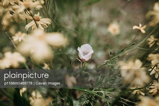 p1166m1489778 von Cavan Images