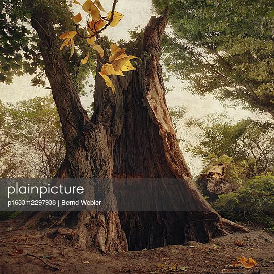 Riverside Poplars I - p1633m2297938 by Bernd Webler
