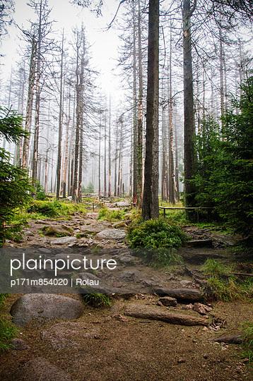 Forest decline - p171m854020 by Rolau