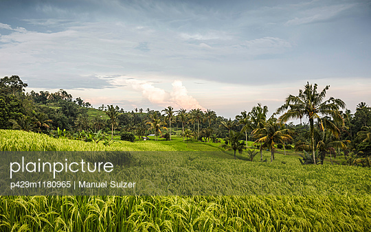 Green Jatiluwih rice terrace, Bali, Indonesia - p429m1180965 by Manuel Sulzer