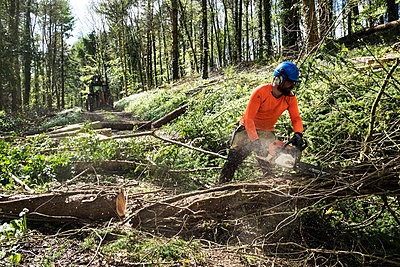 Man wearing bright orange top clearing part of forest. Cutting tree trunk with chain saw. - p1100m2010748 by Mint Images