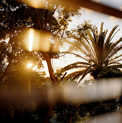 Sunset behind palm trees - p8660035 by aKampmeyer