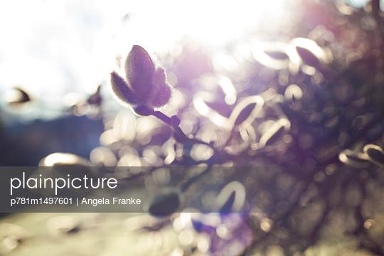 Frühlingsbote - p781m1497601 von Angela Franke