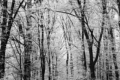 Germany, winter forest - p300m1535721 by Thomas Jäger