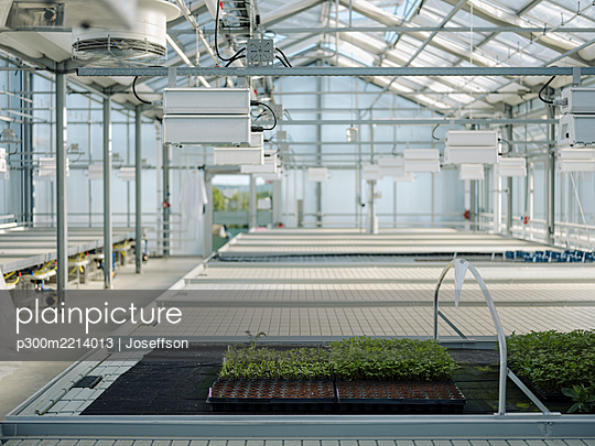 Plants growing in greenhouse - p300m2214013 by Joseffson