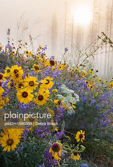 plainpicture - plainpicture p442m1580389 - Kettle River Recreation Are... - plainpicture/Design Pics/Debra Brash