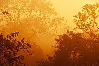 Misty sunrise over treetops; Verla Canca, Goa, India - p442m837712f by Heather Elton