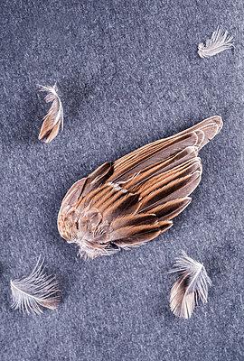 Bird´s wing - p971m1332860 by Reilika Landen