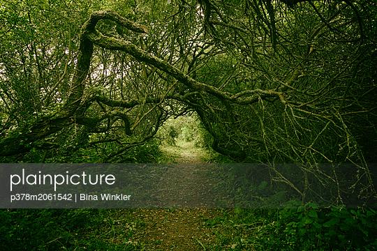 p378m2061542 von Bina Winkler