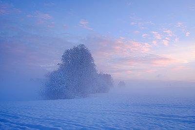 Germany, Gelting, mystical winter landscape at morning light - p300m1019351f by Martin Siepmann