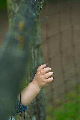 Kinderhand an einem Zaun - p427m1467443 von R. Mohr