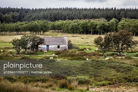 Einsames Haus mit Schafen - p1234m1050277 von mathias janke