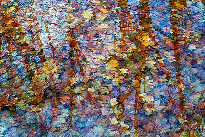 Reflection of trees on a tree filled pond - p1072m828897 by Chinch Gryniewicz