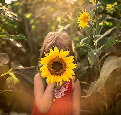 Five year old girl in sunflower field with sunflare - p1166m2095744 by Cavan Images